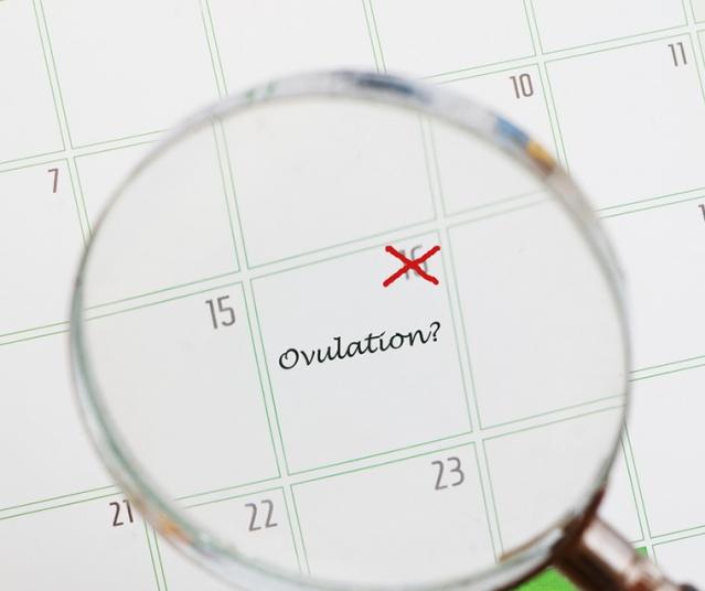calcul ovulation